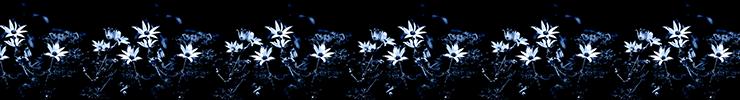 Midnight_flow-bannerv1_preview