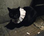 Cat01_thumb