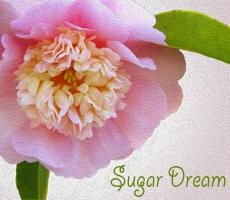 Sugar_dream_preview