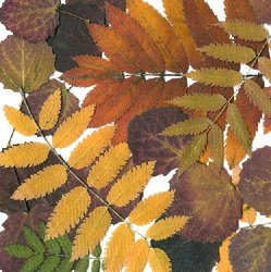 Autumn_leaves_avatar_preview