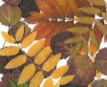 Autumn_leaves_avatar_thumb
