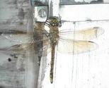 Dragonfly_thumb