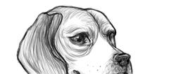 Beagle_preview