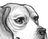 Beagle_thumb
