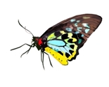 Butterfly_1_thumb