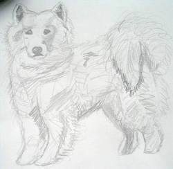 Draw-samoyed-800x800_preview