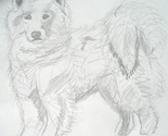 Draw-samoyed-800x800_thumb