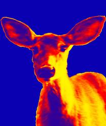 Deer 1 preview