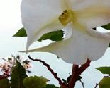 Flower_in_san_diego_thumb