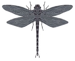 Sm_dragon_fly_pattern_grey_preview