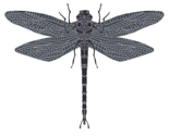 Sm_dragon_fly_pattern_grey_thumb