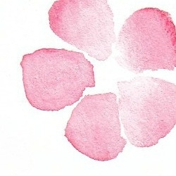 Edited_pink_floral_watercolor_preview