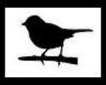 Colebird_thumb