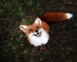 Juniper-fox-happiest-instagram-9_thumb