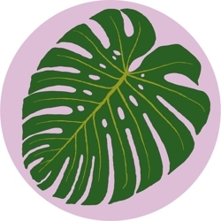 Monstera_foto_round_preview