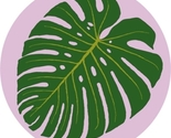Monstera_foto_round_thumb