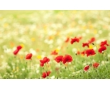 Flower2_thumb