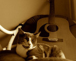 Thegata_guitar-310ct2007northmiami_thumb