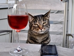 Winecat_preview