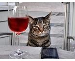 Winecat_thumb