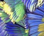 4bird_wings_thumb