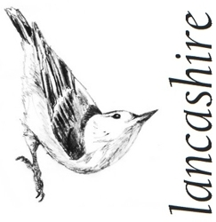 Nuthatch_lancashire_preview