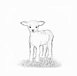 Lamb_standing_bw_preview