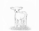 Lamb_standing_bw_thumb