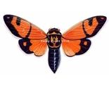 Orange_cicada_watermark__800x459__thumb