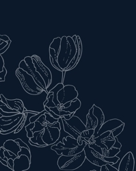 Tulips_minnakomulainen450_preview