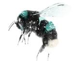 Bumblebee_new_thumb