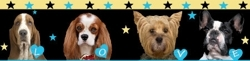 Dog_banner_preview