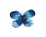 Butterfly1print_thumb