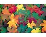 Leaves_1745970c_thumb