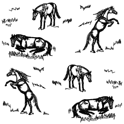 Scribble_horse_double_db_preview