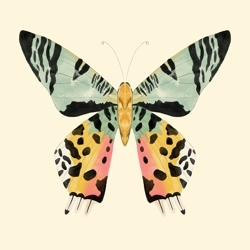 Big_butterfly_preview