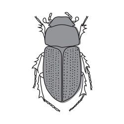 Beetle_preview