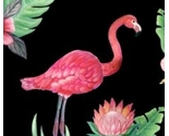 Flamingo_prof_to_sf_thumb