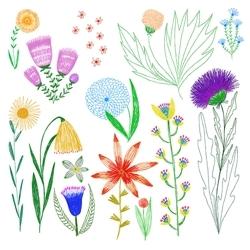 Wild_flowers_illustration_kim_johnson_studios_for_web_preview