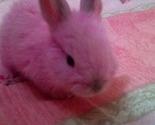 Pink_bunny_ii_by_teddymaniac_thumb
