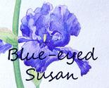 Blue-eyedsusan_thumb