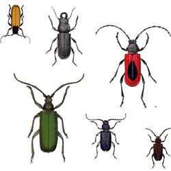 Bugs_a_lot_maj_2012_preview