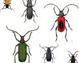 Bugs_a_lot_maj_2012_thumb