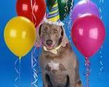 Party-dog-303x365_thumb