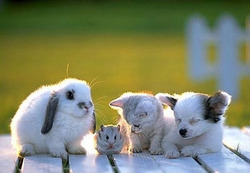 Rabbit-hamster-cat-and-dog_preview