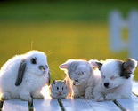 Rabbit-hamster-cat-and-dog_thumb