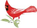 Birdavatar_preview