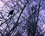 Bird_icon_thumb