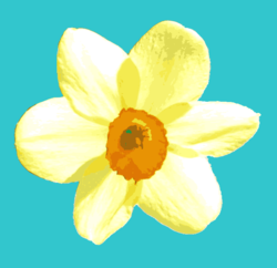 1657404_daffodil_preview