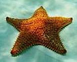 Starfish-200_thumb